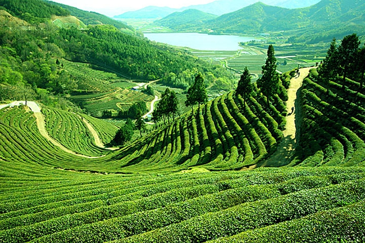 Darjeeling Honeymoon Destination Image