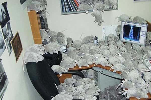 Prank Your Office Colleagues